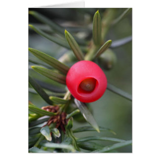 A cone of a yew (Taxus baccata) Greeting Card