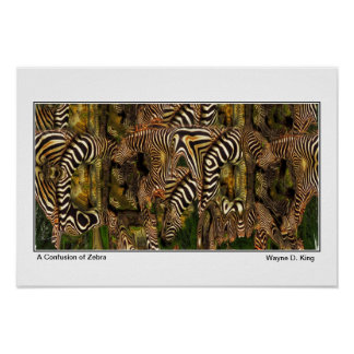 A Confusion of Zebra - Poster