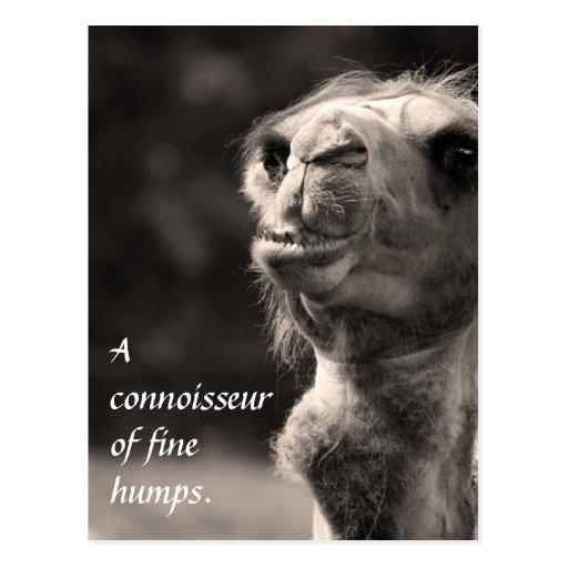 A Connoisseur of fine humps Postcards