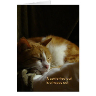 A contented cat... card