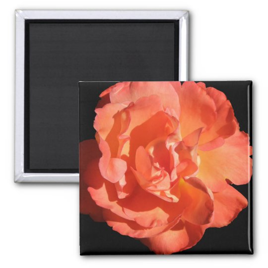 A Coral Coloured Rose... Square Magnet