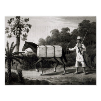 A Cotton Carrier, from 'Travels in Brazil' Poster