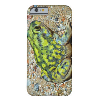 A Couch's Spadefoot toad Barely There iPhone 6 Case