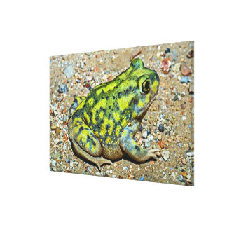 A Couch's Spadefoot toad Canvas Print