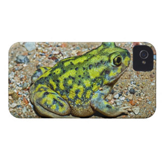 A Couch's Spadefoot toad iPhone 4 Case-Mate Case