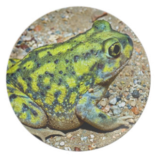 A Couch's Spadefoot toad Plates