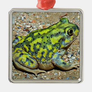 A Couch's Spadefoot toad Silver-Colored Square Decoration