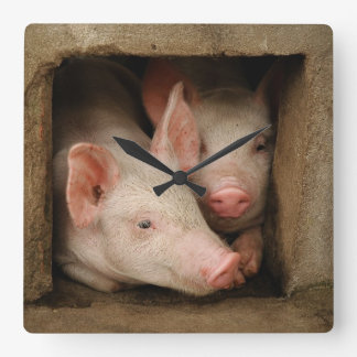 A couple of curious piglets stick their heads wallclock