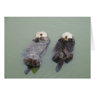 A couple of sea otters taking a nap card