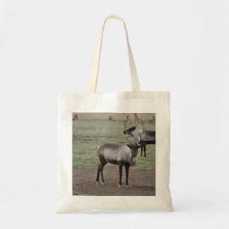 A couple Reindeer in a field on a caribou farm Budget Tote Bag