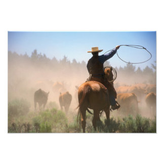 A cowboy out working the herd on a cattle photo print