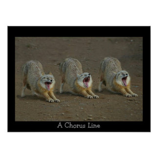 A  Coyote Chorus Line Poster