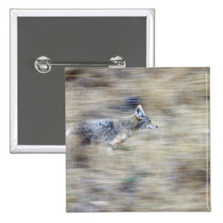 A coyote runs through the hillside blending into 15 cm square badge