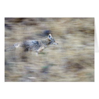 A coyote runs through the hillside blending into greeting cards