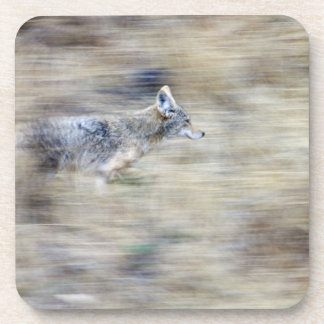 A coyote runs through the hillside blending into beverage coasters