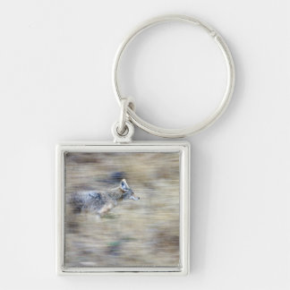 A coyote runs through the hillside blending into keychains
