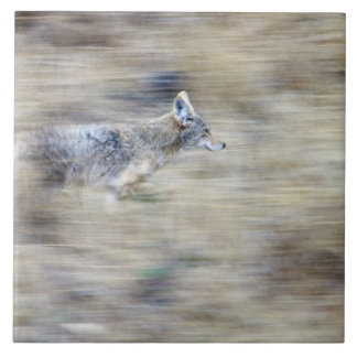 A coyote runs through the hillside blending into large square tile