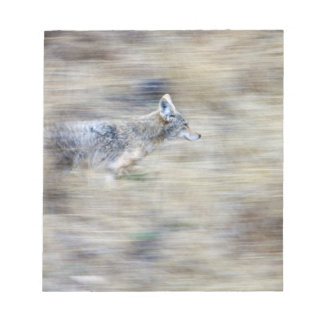 A coyote runs through the hillside blending into memo pads