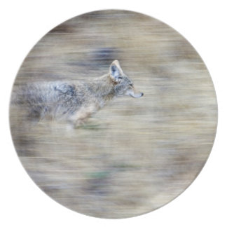 A coyote runs through the hillside blending into party plate