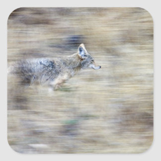 A coyote runs through the hillside blending into stickers