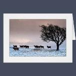 A Cumbrian Christmas Card - The Helm, Kendal