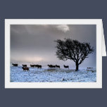 A Cumbrian Christmas Card - The Helm, Kendal