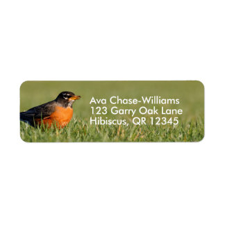 A Curious American Robin Return Address Label