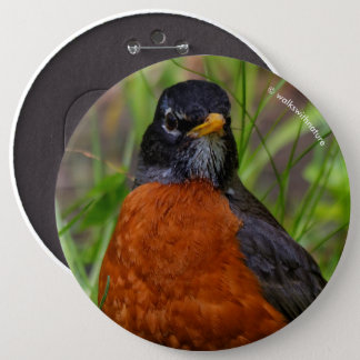 A Curious and Hopeful American Robin 6 Cm Round Badge