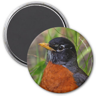 A Curious and Hopeful American Robin Magnet