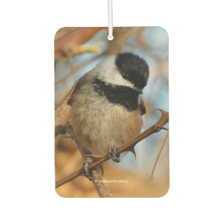 A Curious and Hungry Black-Capped Chickadee
