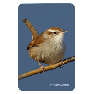 A Curious Bewick's Wren in the Tree Rectangular Photo Magnet