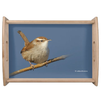 A Curious Bewick's Wren in the Tree Serving Tray