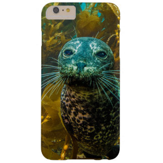 A Curious Harbor Seal Kelp Forest   Santa Barbara Barely There iPhone 6 Plus Case