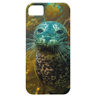A Curious Harbor Seal Kelp Forest | Santa Barbara Case For The iPhone 5