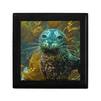 A Curious Harbor Seal Kelp Forest | Santa Barbara Gift Box