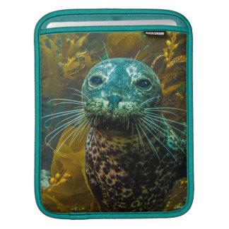 A Curious Harbor Seal Kelp Forest | Santa Barbara Sleeve For iPads
