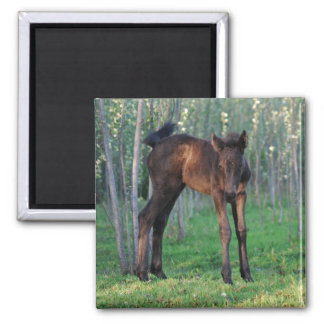 A cute baby foal magnets