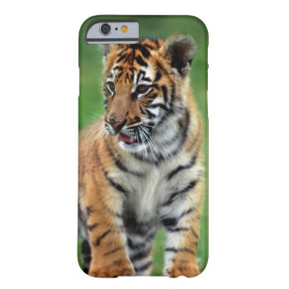 A cute baby tiger barely there iPhone 6 case