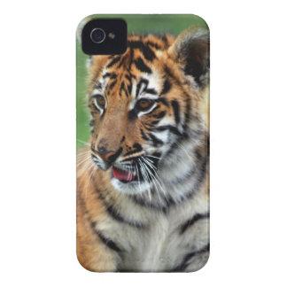 A cute baby tiger iPhone 4 Case-Mate case