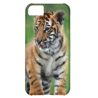 A cute baby tiger iPhone 5C case