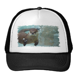 A cute Brown otter swimming in a clear blue pool Cap