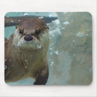 A cute Brown otter swimming in a clear blue pool Mouse Mat