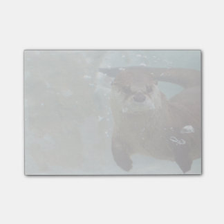 A cute Brown otter swimming in a clear blue pool Post-it Notes