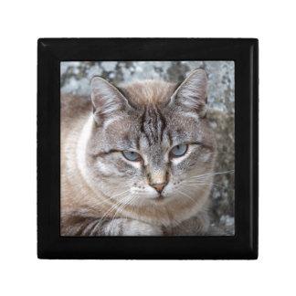 a cute cat gift box