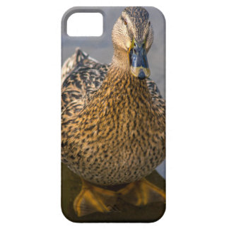 A cute duck case for the iPhone 5