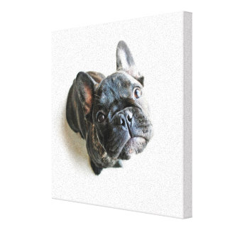 A Cute French Bulldog Puppy Canvas Print