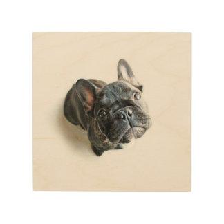 A Cute French Bulldog Puppy Wood Wall Art