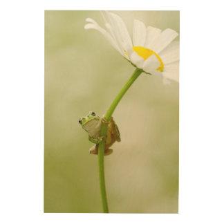 A Cute Frog Wood Print