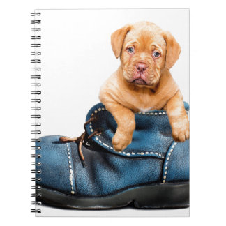 A cute little brown puppy posing over a blue shoe spiral note book