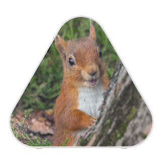 A cute red squirrel
